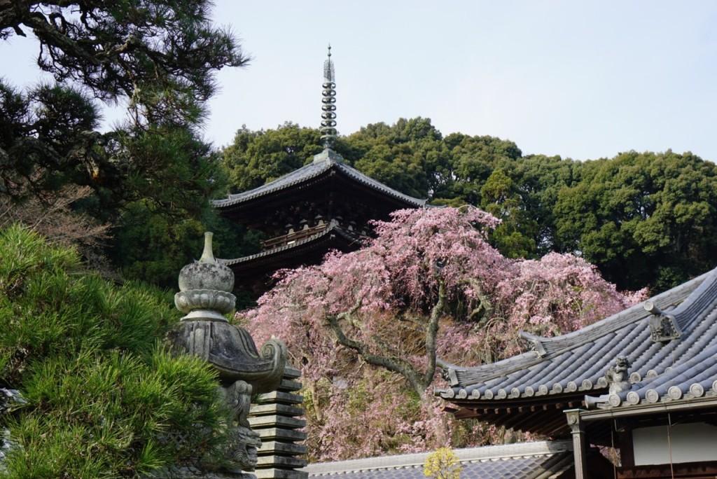 次世代に伝える ー 當麻寺西塔(国宝)100年ぶりの本格的修理へ