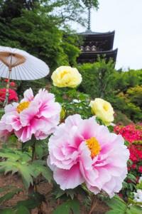 護念院の花