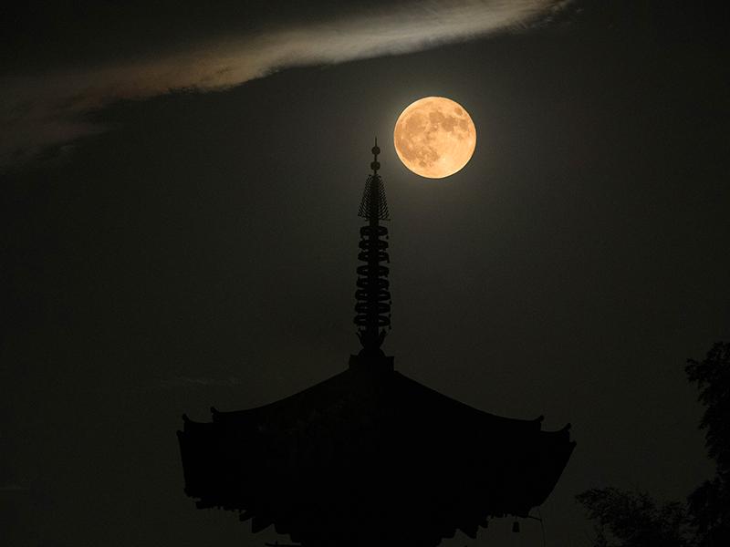 護念院 双頭園、八幡山より望む 當麻寺東塔