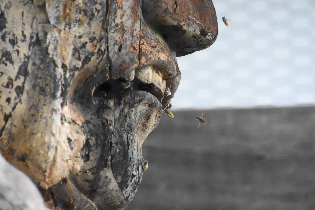 當麻寺仁王門阿形像とニホンミツバチ
