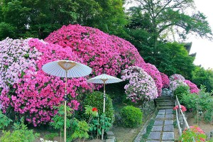 護念院の庭園